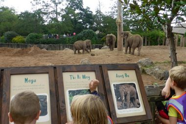 The Spinney Holiday-Club-Zoo-Trip